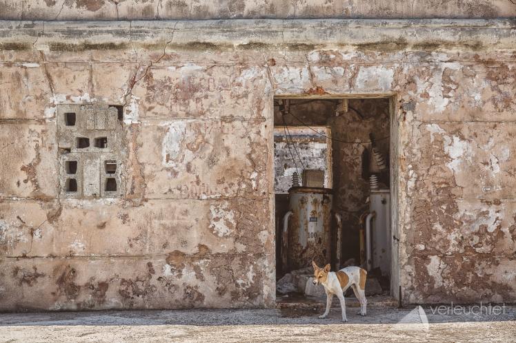 Havanna-16